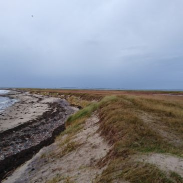 Torø og Assens